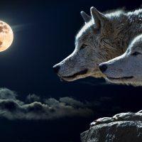 Ισορροπία στα βιολογικά συστήματα - Πώς οι λύκοι αλλάζουν τα ποτάμια